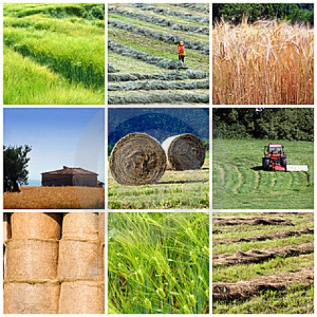 Quot Agricultur Quot The Best Agricultural Information Photo